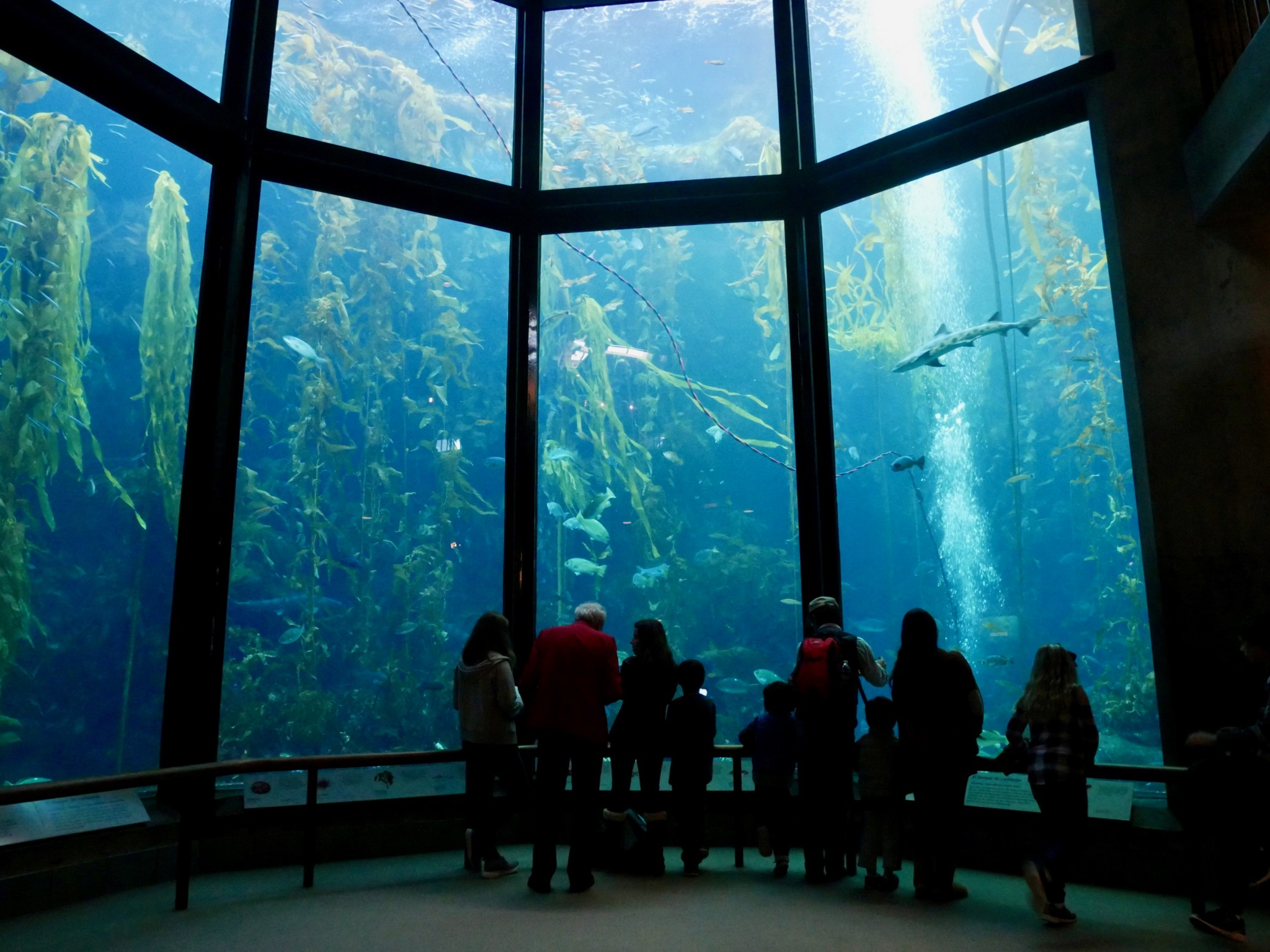 Kelp tank